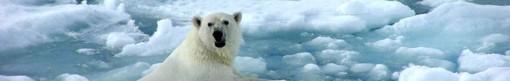 asu bonn un climate change negotiations polar bear