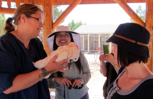 Attorney Amanda Chua, center, and other members of the State Bar Animal Law Section recently visited the Best Friends Animal Sanctuary in Kanab, Utah.