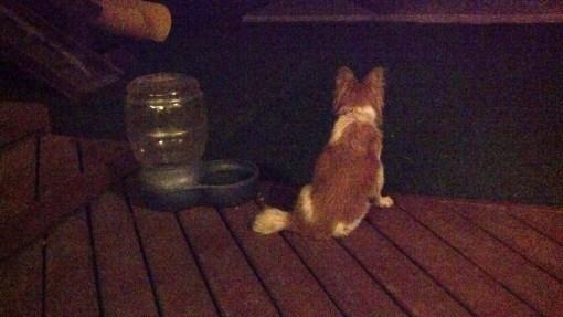 Cleo on porch 07-06-13