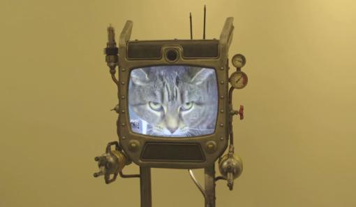 beam replicator cat on TV
