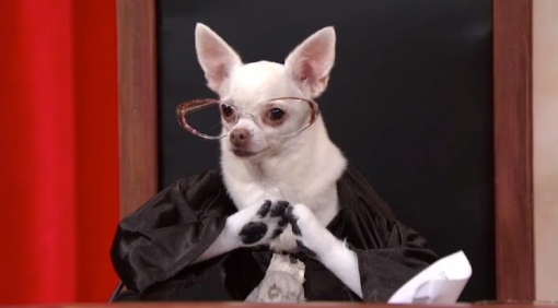 Which Justice is this? You'll have to watch to find out. Puppy and Supreme Court Last2Week_Tonight_with_John_Oliver