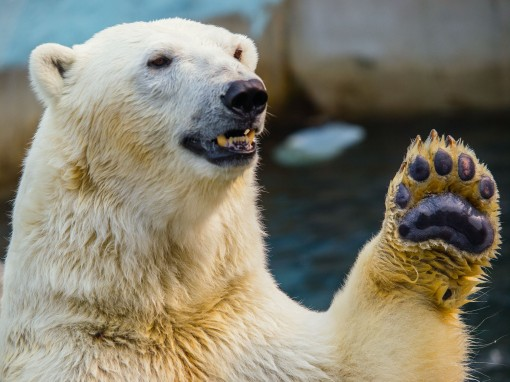Is there anything cooler than wishing a friend well, high-five-style? (A: No.)