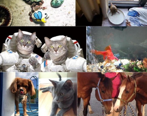 A sampling of all NABE's creatures, great and small. Pet Dog Cat